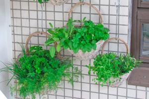 C mo crear jardines verticales for Historia de los jardines verticales